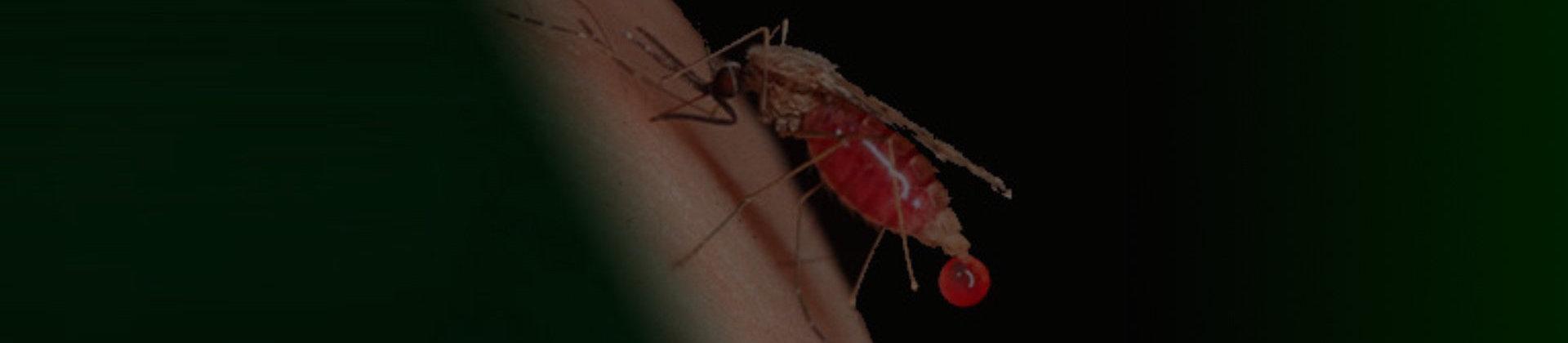 Medical Entomology and Zoology